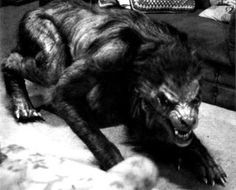 An example of a hispo werewolf from An American Werewolf in London.