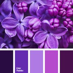 almost black color, blue color, color matching, color of hydrangea, color of…