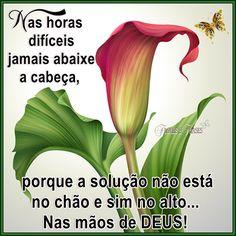 NAS HORAS DIFÍCEIS JAMAIS ABAIXE A CABEÇA... Flores,frases,mensagens