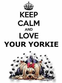 Keep Calm and Love Your Yorkie...We Love Our Widdle Mutt Mutts❤