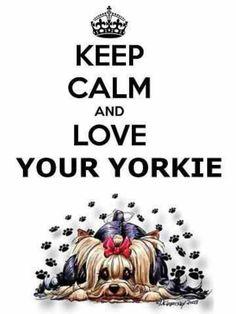 Love your Yorkie