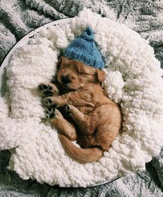38 Cute Animal Pictures to help you get through hump day. How can you resist these animals doing what they do best, looking cute Super Cute Puppies, Baby Animals Super Cute, Cute Baby Dogs, Cute Little Puppies, Cute Dogs And Puppies, Cute Little Animals, Cute Funny Animals, Cute Pups, Cute Animals Puppies
