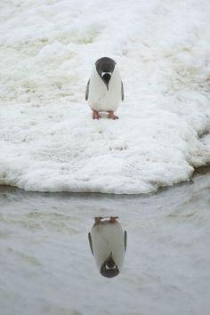 our-incrível-mundo: Animal Narcisismo & gt;  Mundial bonita surpreendente incrível