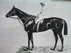 Kincsem, Hungarian racemare and most successful racehorse ever, winning all 54 starts in five countrie