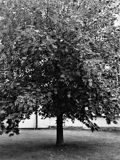 12.7 Photo Black, Black And White, Plants, Outdoor, Outdoors, Black N White, Black White, Plant, Outdoor Games