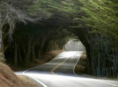 Not sure where this might be, but looks like an awesome road to venture down.