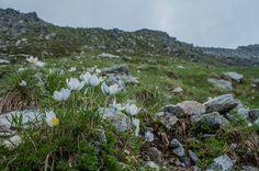 Flora, Mountains, Nature, Plants, Travel, Naturaleza, Viajes, Destinations, Plant