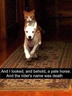Cool Animals Picdump picture brought to you by evil milk funny pics. Image related to Cool Animals Picdump 61 Best Cat Memes, Pet Memes, Funny Animal Memes, Cute Funny Animals, Funny Animal Pictures, Funny Cute, Funny Dogs, Funny Memes, Cute Cat Memes