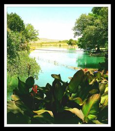 South Texas Fresh Water Pond Photography by artisticmindbyhannah. Explore more products on http://artisticmindbyhannah.etsy.com
