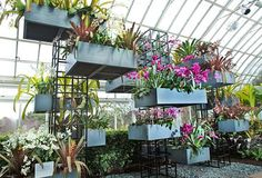 Landscape Architect Raymond Jungles brings Brazil to the New York Botanical Garden for their 7th Annual Orchid Show