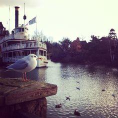 A Seagull, Disneyland Paris