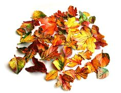 Andie's Specialty Sweets: Edible, Candy Fall Leaves, 24 Piece Box Set #MarthaStewartAmericanMade