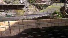 Heilige Birma Katzengehege Cats Kitten Eigenbau mit Estrichmatten von Gü...