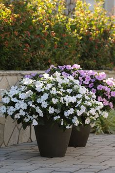 13 flowers you cant kill. For gardeners who dont have a green thumb. - My Garden Muse Container Flowers, Container Plants, Container Gardening, Patio Plants, Garden Plants, Shade Garden, Pot Jardin, Pot Plante, Colorful Plants