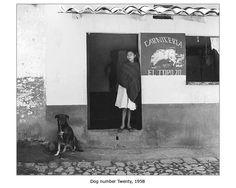 Manuel ALVAREZ BRAVO :: Dog Number Twenty, 1958