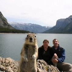 Sometimes the photographer just happens to be at the right place, at the right time. Perfectly Timed Photos is just proof of that. Perfectly Timed Photos, a collection of hilarious pics you must see. Funny Animals, Cute Animals, Funniest Animals, Happy Animals, Wild Animals, Ground Squirrel, Perfectly Timed Photos, Tier Fotos, Belle Photo