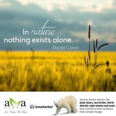 Agree??? In #nature nothing exists alone! #QuoteOfTheDay. #EcoFriendly. Click here: https://www.facebook.com/amaherbal/photos/a.283777945111081.1073741829.274434279378781/525746844247522/?type=3&theater …