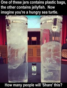 How Turtles End Up Eating Plastic.