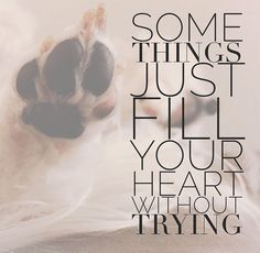 Some Things Just Fill Your Heart Without Trying | Dog Quotes |