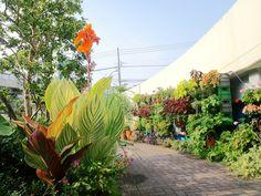 ■ Milk crate Vertical garden with Canna