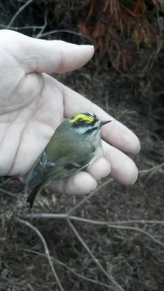 A bird in the hand. ..