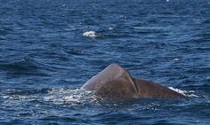 Andenes whalesafari