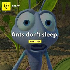i have now realized that i could never be an ant. 8 Facts, Wtf Fun Facts, True Facts, Funny Facts, Crazy Facts, Random Facts, Facts You Didnt Know, Did You Know, The More You Know