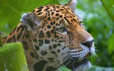 La mejor forma de preservar la naturaleza es conociéndola.  3 de Marzo, Día Mundial de la Naturaleza.