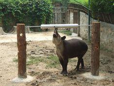 tapir enrichment - Google Search