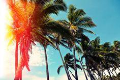 palm tree summer sun