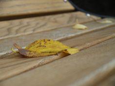 秋模様:魚の庭 2010-10-01