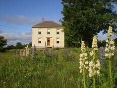 Home of Fine Artist Made via Frolic!