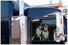 Mutts4Trucks pairs homeless dogs with truckers to bring an end to loneliness for both.