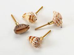 Seashell Knobs, Set Of 4 From Lulu DK On OpenSky