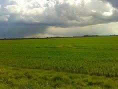 Fields s/s16