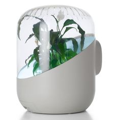 Plant-Powered Air Purifier
