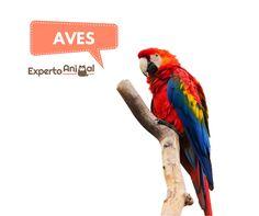 Imponentes, hermosas y únicas, así son las aves y si quieres saber más sobre ellas estás en el lugar adecuado. En ExpertoAnimal encontrarás todo lo que necesitas saber sobre las distintas especies de aves que reinan nuestro planeta. Plumas, garras, picos y muchos colores... descubre con nosotros el maravilloso mundo de las aves. #ExpertoAnimal #MundoAnimal #ReinoAnimal #Animales #Naturaleza #Aves #Plumas