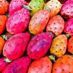 Prickly Pears    © Peppe Tornetta - 2012