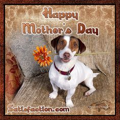Happy Dog Mothers Day Jack Rusell