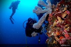 Olele Beach, Gorontalo, Indonesia. Underwater heaven! :D