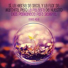 Sí, la hierba se seca, y la flor se marchita, pero la palabra de nuestro Dios permanece para siempre.» (Isaías 40:8 RVC)