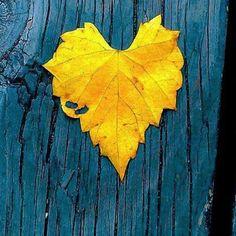 Fargekombinasjonen gult og petroleum er bare rå!👊😃 Vi ønsker dere får en fantastisk høstuke!🍃☀️🌾🍂🍁 # - fargerike_norge