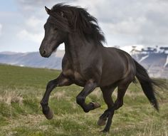 The Feng Shui Horse Symbol: What It Means and How You Can Use It