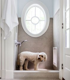 """Great Idea-""""source: Morgan Harrison Home Mud room dog shower with pale blue paint color paired with tumbled tile shower surround. Oval mud room shower window shaped like porthole and polished nickel shower kit."""" - Home Decorating DIY Pale Blue Paints, Dog Washing Station, Dog Station, Window In Shower, Dog Rooms, Dog Shower, Up House, Fish House, Design Blog"""