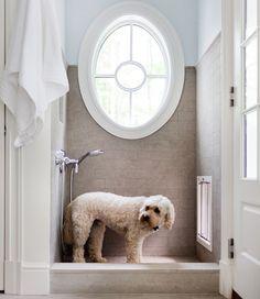 the dog wash