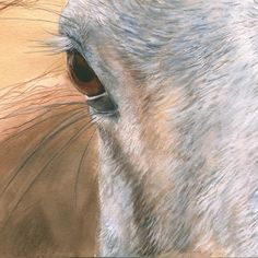 Window to a Soul - 11x14 Matted and Framed  $550   Original watercolor inspired by the photography of Coco Baptiste. Horses are such amazing, sensitive and responsive creatures. I've been blessed to be among them, to befriend them, to be trusted by a few...