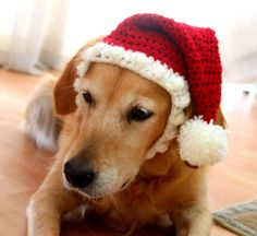 Santa Hat for Dogs, Doggy Santa Hat, Holiday Dog Hat, Christmas Hat for Dogs, Large Breed Dog Hat, Christmas Dog Hat, Santa Dog Hat - pinned by pin4etsy.com