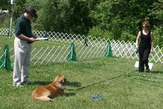 How to Teach a dog to Sit and Stay: Step To Teach A Dog ~ petsrank.com Dogs Inspiration