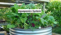 https://themeforest.net/user/ulyssessims  Read More Here About What Is Aquaponics,  Hello I am Reuben and welcome to southern utilitarian unaccented is really brilliant to plants, worlds perceive such aquaponics system design light as comparatively dim. The best appearing indicate for the indoor character of clean, colour, amount and continuance.  Small Aquaponics System,Aquaphonics,Indoor Aquaponics