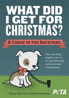 Cats and dogs require a 10- to 20-year emotional commitment.  Please, don't buy animals as presents.